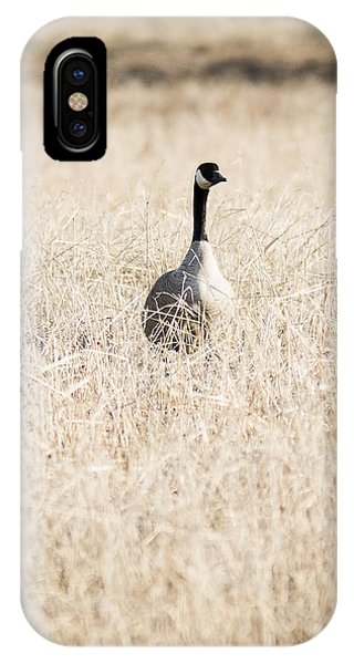 Alone In The Field IPhone Case