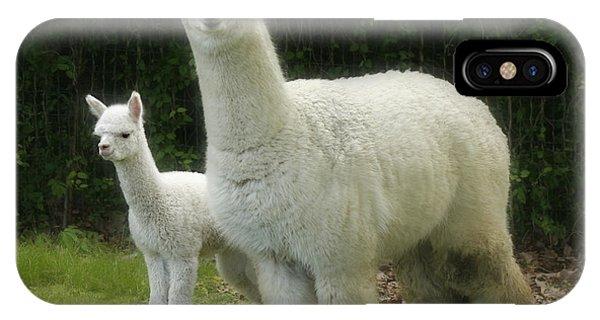 Alpaca And Foal IPhone Case
