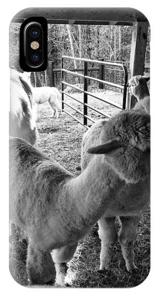 Alpaca Meeting  IPhone Case