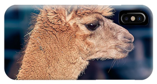 Llama iPhone Case - Alpaca Wants To Meet You by TC Morgan