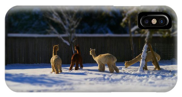 Alpacas In The Snow IPhone Case