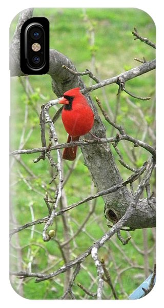 Always With Us -cardinals IPhone Case