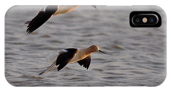 Am Avocet IPhone Case