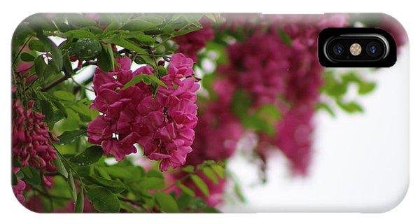 Amaranth Pink Flowering Locust Tree In Spring Rain IPhone Case