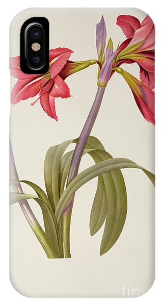 Botanical iPhone Case - Amaryllis Brasiliensis by Pierre Redoute