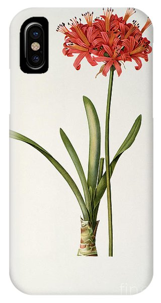 Botanical iPhone Case - Amaryllis Curvifolia by Pierre Redoute