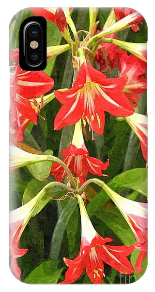 Amaryllis Lily Bunch IPhone Case