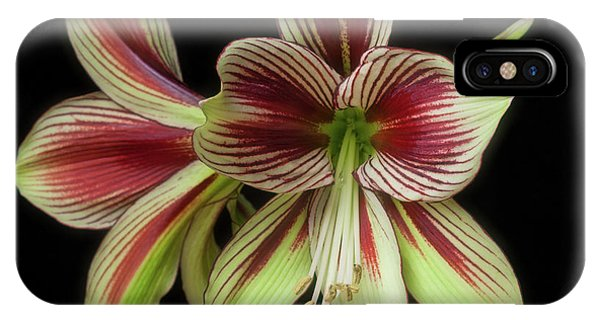 Amaryllis 'papilio Improved' IPhone Case
