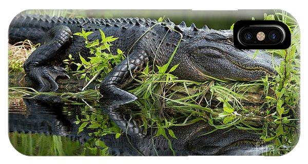 American Alligator In The Wild IPhone Case