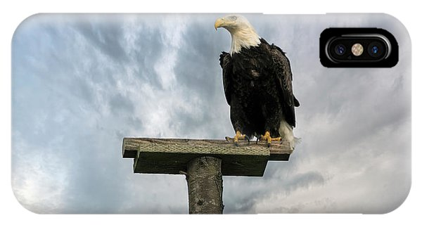 iPhone Case - American Bald Eagle Perched On A Pole by David Gn