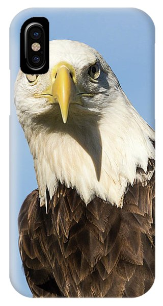 American Bald Eagle Portrait - Winged Ambassador IPhone Case