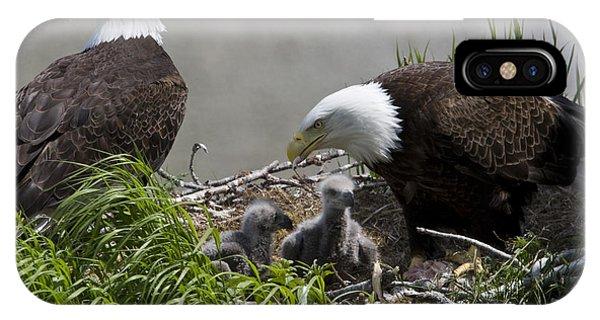 American Bald Eagles, Haliaeetus IPhone Case