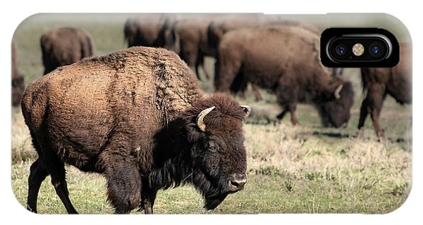 American Bison 5 IPhone Case
