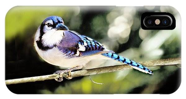 American Blue Jay On Alert IPhone Case
