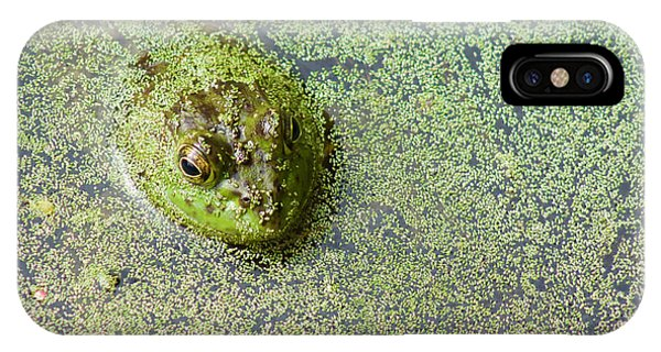 American Bullfrog IPhone Case