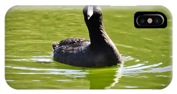 American Coot Portrait IPhone Case