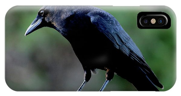 American Crow In Thought IPhone Case