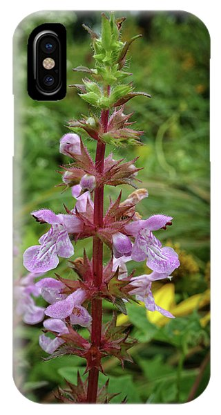 American Germander IPhone Case