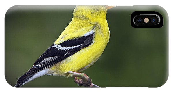American Golden Finch IPhone Case