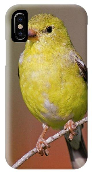 American Goldfinch  Female IPhone Case