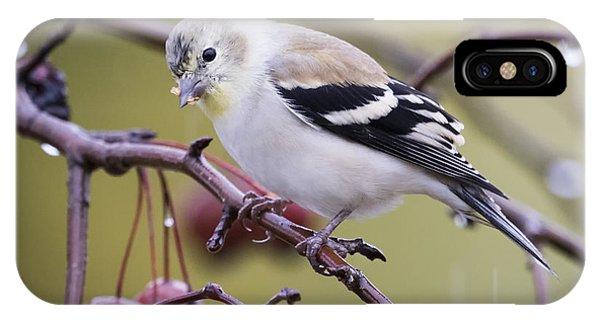 American Goldfinch In The Rain IPhone Case