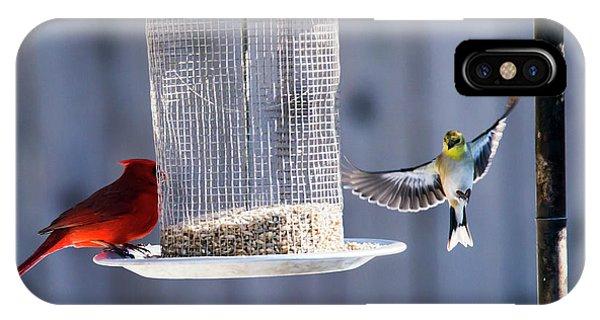 American Goldfinch Inbound IPhone Case