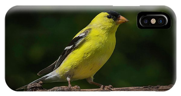 American Goldfinch Male IPhone Case