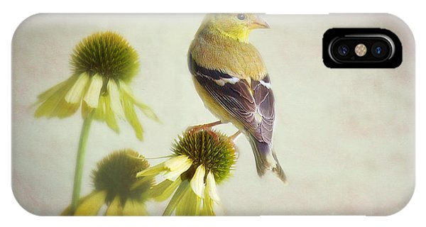 American Goldfinch On Coneflower IPhone Case