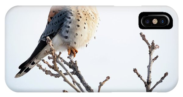 American Kestrel At Bender IPhone Case