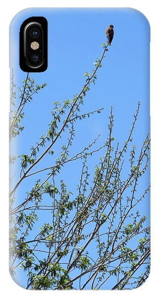 American Kestrel Atop Pecan Tree IPhone Case