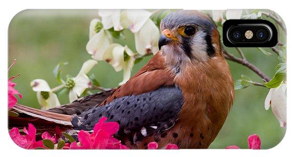 American Kestrel In The Springtime IPhone Case