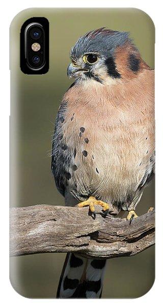 American Kestrel Portrait - Winged Ambassadors IPhone Case