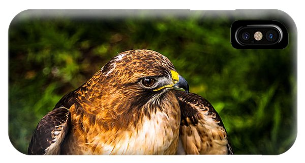 American Kestrel Profile IPhone Case
