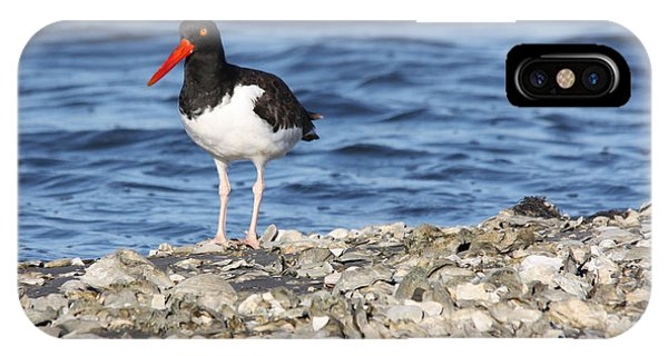 American Oystercatcher IPhone Case