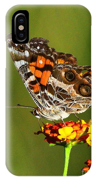 Wakulla iPhone Case - American Painted Lady by Barbara Bowen