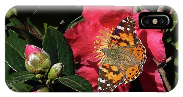 American Painted Lady On Camelia IPhone Case