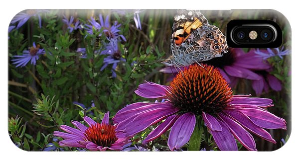American Painted Lady On Cone Flower IPhone Case
