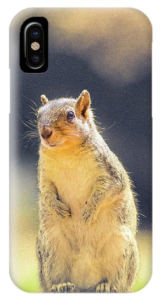 American Red Squirrel IPhone Case