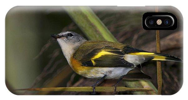 American Redstart IPhone Case