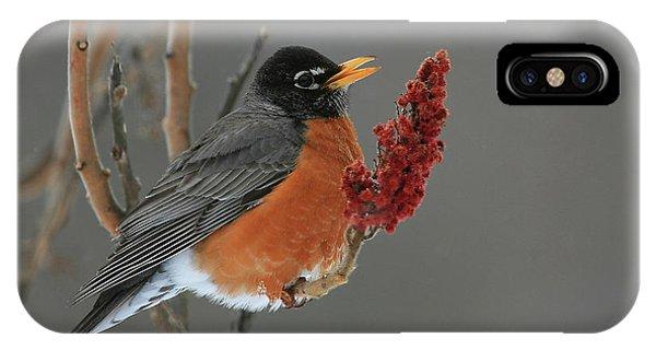 American Robin On Sumac IPhone Case