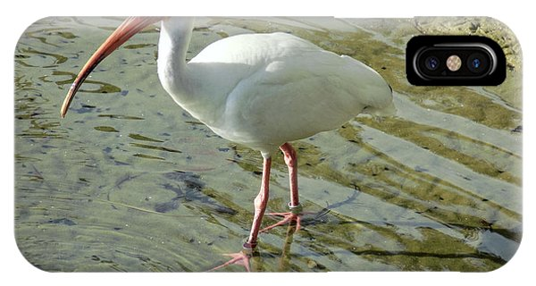 American White Ibis IPhone Case