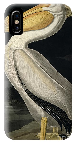 Great White Shark iPhone Case - American White Pelican by John James Audubon