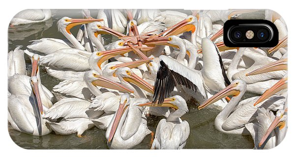 American White Pelicans IPhone Case