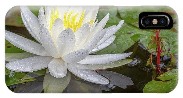 American White Water Lily IPhone Case