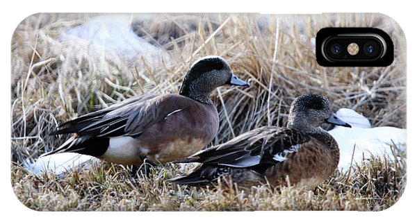 American Wigeon Mated Pair IPhone Case