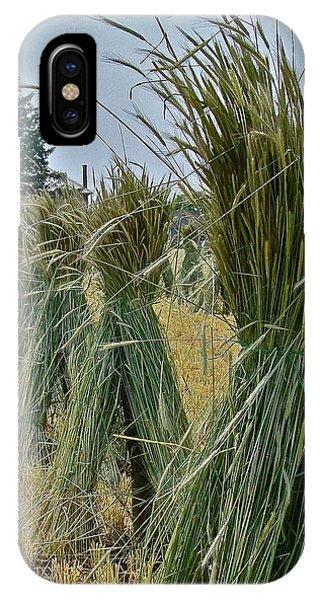 Amish Harvest IPhone Case