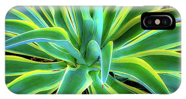 An Agave In Color  IPhone Case