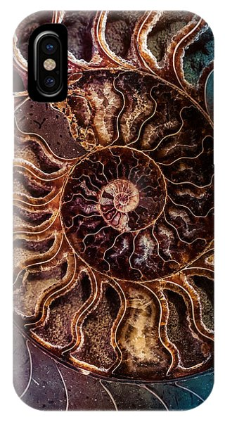 An Ancient Shell IPhone Case
