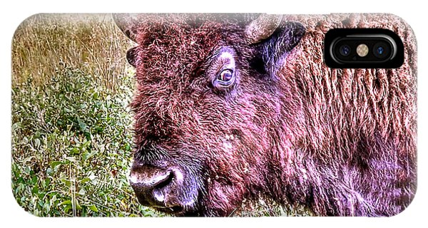 An Astonished Bison IPhone Case