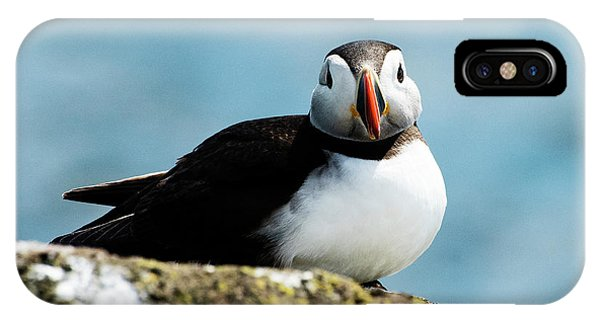 An Atlantic Puffin IPhone Case